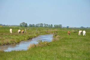 Les marais : l'une des caractéristiques communes des trois territoires.